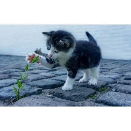 Mimóza macskamentő Alapítvány - JóKupon